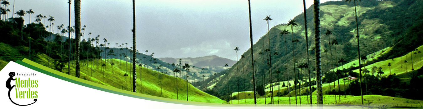 Valle-del-cocora,-quindio---FMV